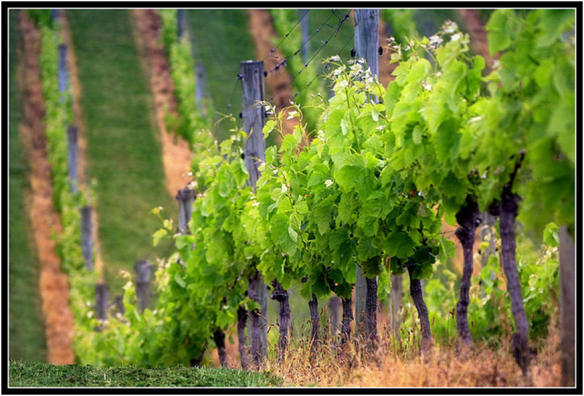 Feeding the world: Don't forget the wine! (Chris Gin, flickr)