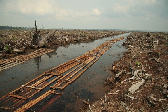Deforestation: not helpful. (Image by: Aidenvironment, flickr)